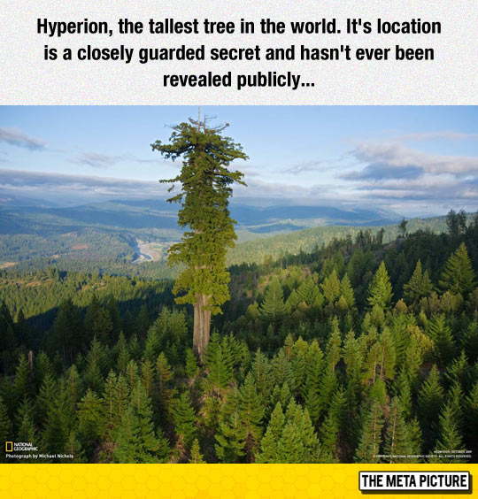 The Tallest Tree In The World