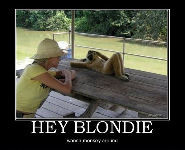 Hey Blondie
