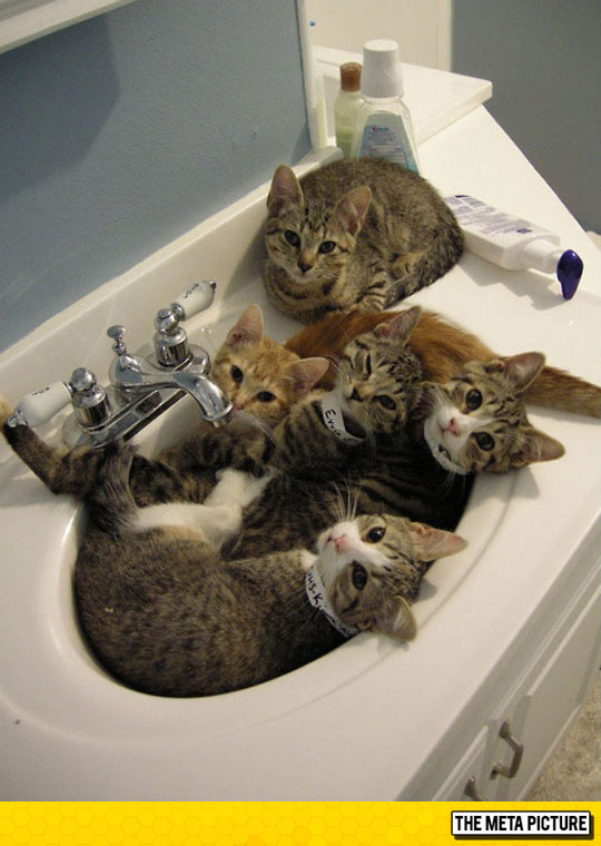Sorry, The Sink Is Busy Today