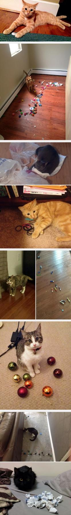 Cats Who Are Hoarders