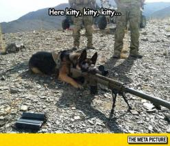Dog Goes To War