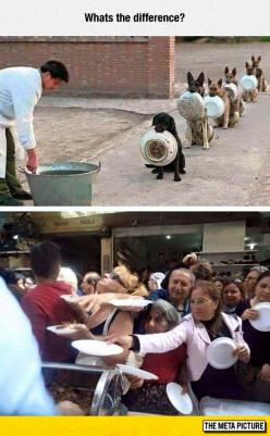 Dogs Manners Vs. Human Manners