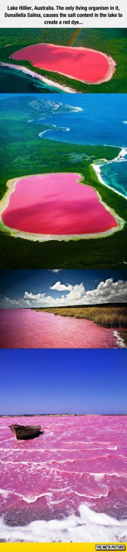 Ever Seen A Pink Lake?