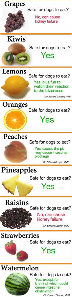 Fruits Vs. Dogs