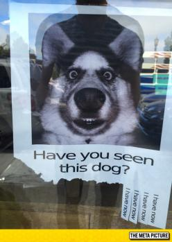 Have You Seen Him?