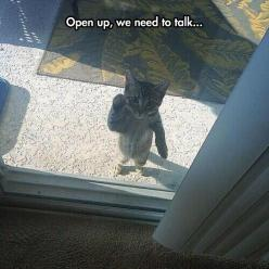 Open Up Right Meow!