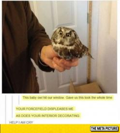Owl Isn't Amused