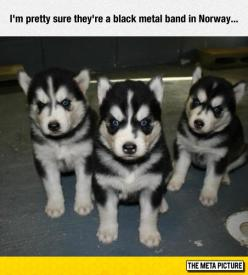 Pups Of Northern Darkness