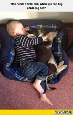 Save Money Buying A Dog Bed