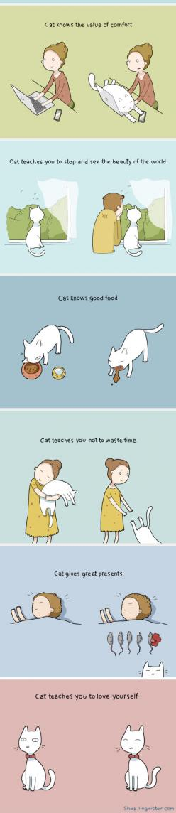 The Benefits Of Having A Cat