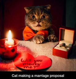 The Cutest Proposal