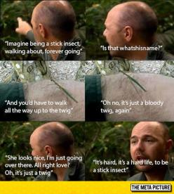The Life Of A Stick Insect