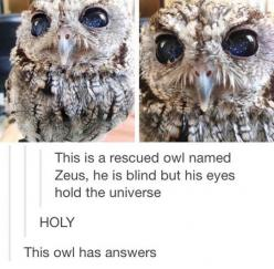 This Owl's Eyes