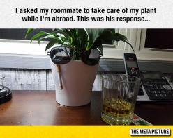 This Plant Is In Good Hands