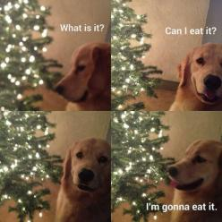 When Dogs Find Something New
