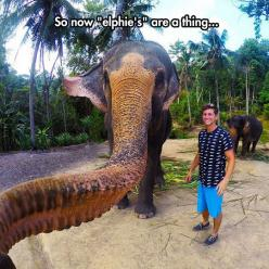 A Selfie Taken By An Elephant