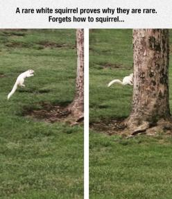 Apparently White Squirrels Can't Jump