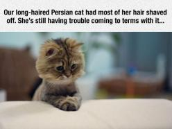 Cat Gets A Haircut