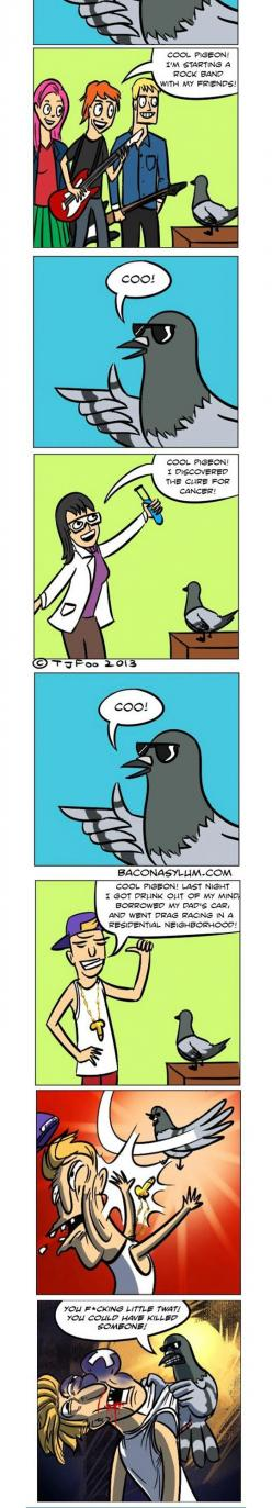Cool Pigeon Doesn't Mess Around