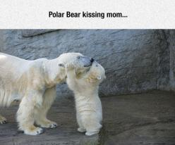Polar Bears Are Adorable