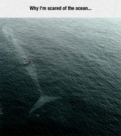 That Whale Is Too Big