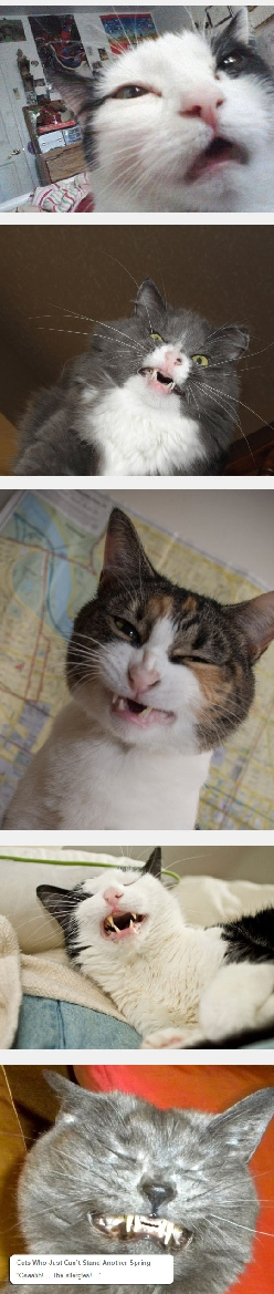 Cat Faces Before They Sneeze