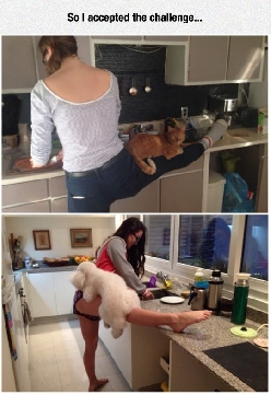 Cooking With Pets