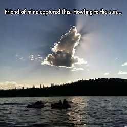 Howling To The Sun