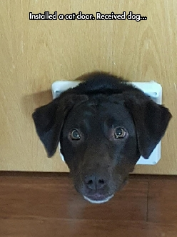 It's A Labra-Door