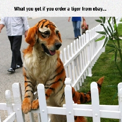 Ordering A Tiger