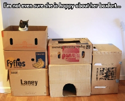 A cat and his castle