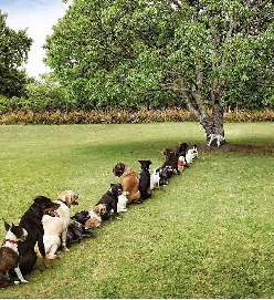 Damn deforestation is really taking a toll on the dog community...