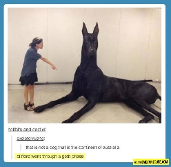 Gigantic dog