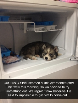 He Wants To Live In The Fridge