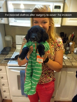 Pet In Baby's Clothes