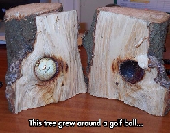 Plant It And See If It Grow Into A Tiger Woods