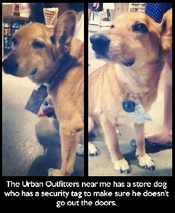 Security tag for dogs…