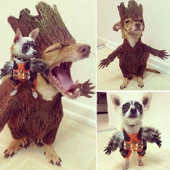 The Cutest Groot Cosplay