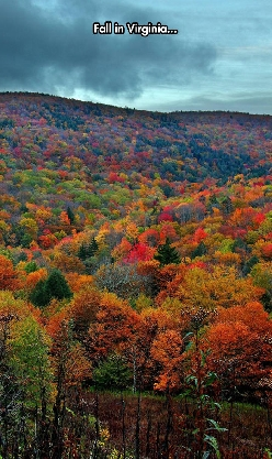 The Most Colorful Season