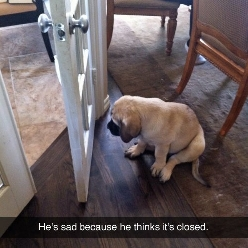 The puppy who lost its way