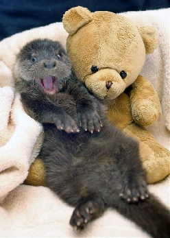 This Otter Is So Excited To Have A New Friend