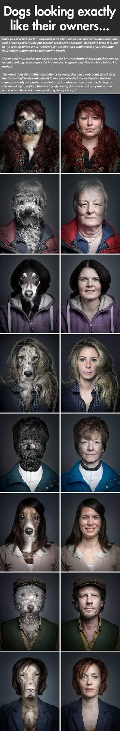 Dogs looking like their owners