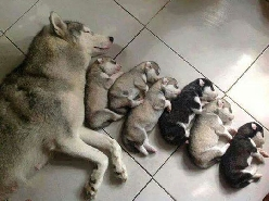 Mother Of Cuteness