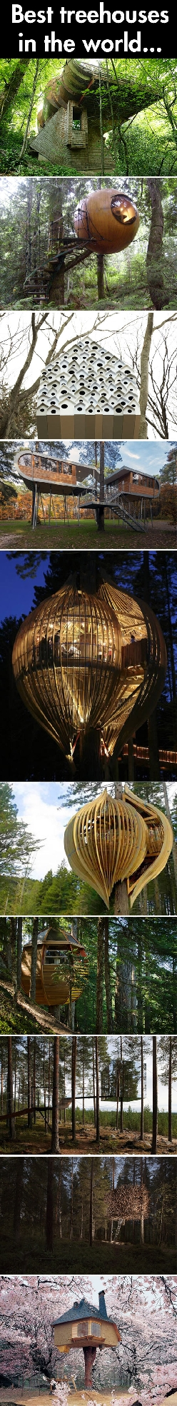 Tree houses of the world