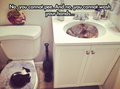Cat Bathroom Invasion