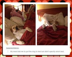 Putting The Dog To Bed