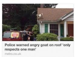 The Greatest Headline Ever Written