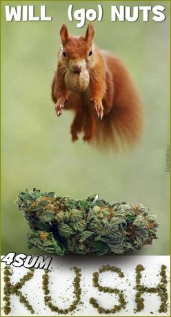 Keep Calm, The Squirrell Is Mental