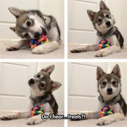 How To Capture A Dog's Attention