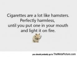 Comparing Cigarettes With Hamsters